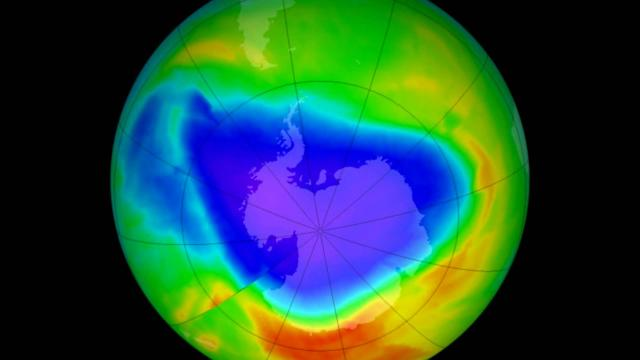 El calentamiento global es una amenaza para muchas especies, plantas y animales