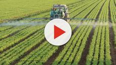 Disminución de la agricultura en Rusia