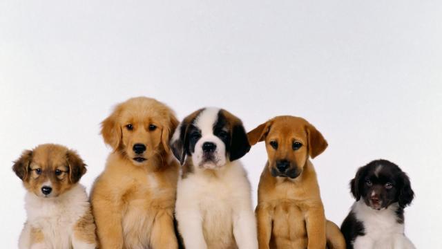 Terremoto de Italia: Jack y Lola, perros que ayudan a los pacientes del corazón