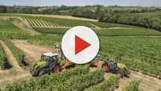 Conferencia agrícola: un éxito impulsado por la demanda de cáñamo orgánico