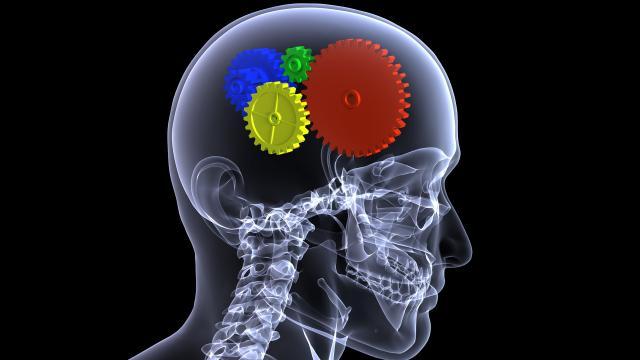 Neurogénesis: entre la verdad y la mentira