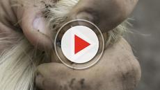 VIDEO - Bimba di 2 anni dentro un'auto rubata: ritrovata e morta subito dopo