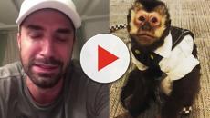 Twelves, o macaco do cantor Latino, morre após ser atropelado