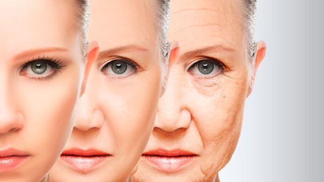 Harvard hizo un gran avance en el estudio del envejecimiento celular