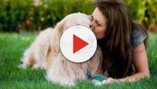 ¿Cómo debes entrenar a tu mascota?