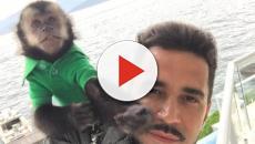 Latino cuidava do macaco como um filho