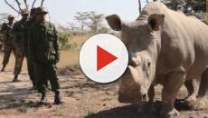 Sudan, last remaining North African White Rhino has died