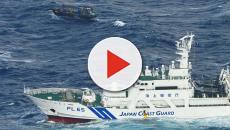 Los pescadores japoneses capturan 100 delfines en cinco días