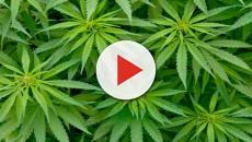 Scisciano: arrestato 27enne per possesso di droga