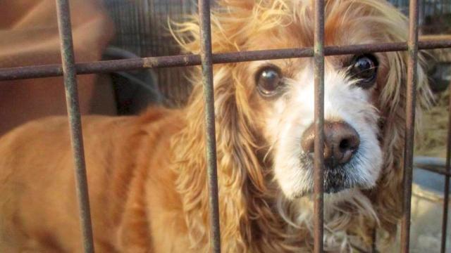 Rescatado can de una granja de carne de perro en Corea del Sur