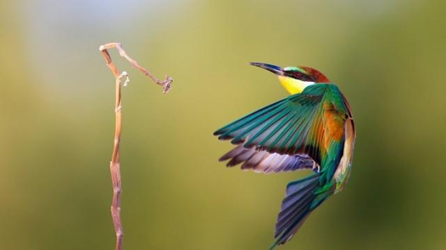 El medio ambiente determina la vulnerabilidad de los colibríes caribeños