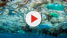 Contaminación Plástica: Cómo controlarla