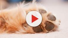 Cachorro viraliza na internet por ter