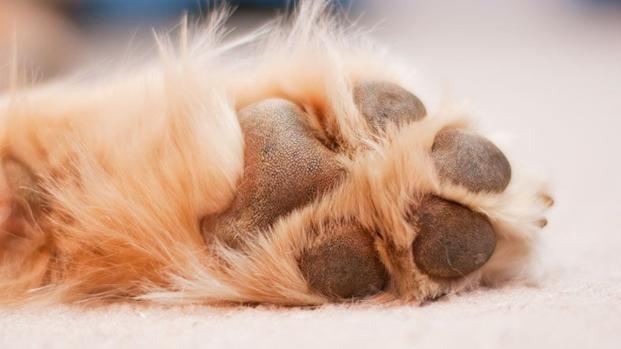 "Cachorro viraliza na internet por ter ""rosto humano"""