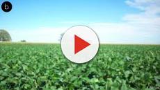 Importação de soja da Alemanha colabora com redução das florestas sul-americanas