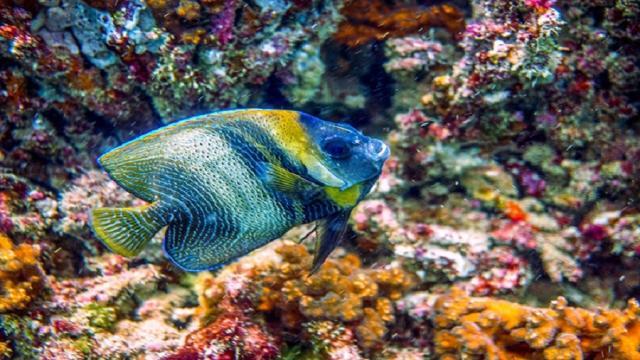Arrecifes de coral profundos: investigadores descubren el imperio marino