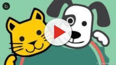 CONHEÇA O TRABALHO DA ONG E-PET EM PROL DOS ANIMAIS CARENTES, veja