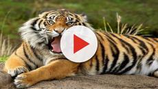 Las especies de extinción y la ayuda de la tecnología