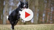 Em Curitiba, ONGs incentivam que cães abandonados sejam adotados