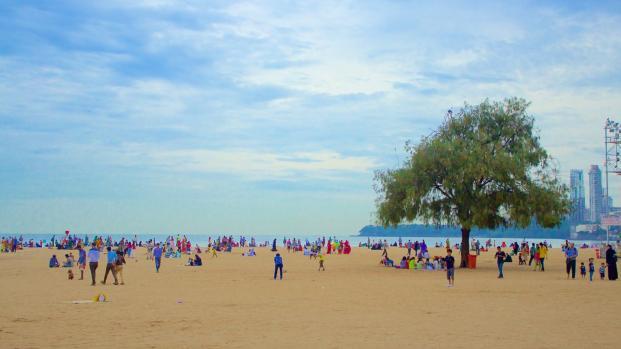 La playa de Mumbai va de un vertedero a un criadero de tortugas en dos años