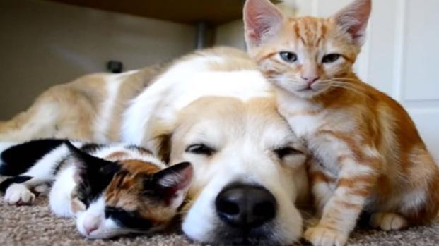 Amici Fedeli: nasce il conto corrente per gli animali