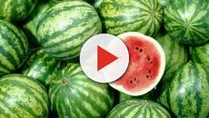 Conheça alguns alimentos que foram modificados pelos homens