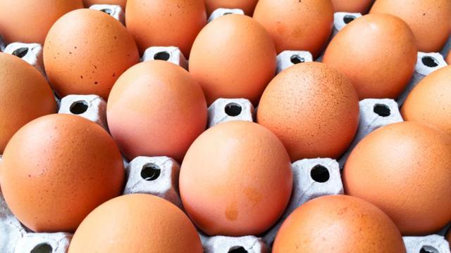 Los huevos son alimento fundamental para el desarrollo del cerebro de los niños
