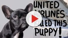 United Airlines kills more dogs than any other airline
