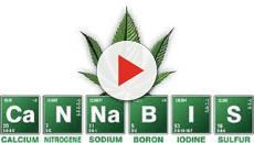 Cannabis, un business legale, anche Guè Pequeno pronto sul mercato?