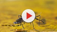 VIDEO: Fiebre amarilla un virus con vigilancia internacional