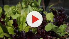 Stavano preparando un piatto di insalata: nella busta il macabro ritrovamento