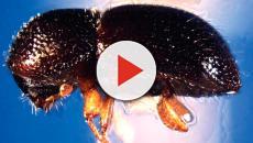 La relación entre algunos escarabajos y el alcohol