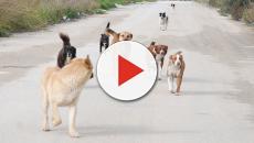 Massacro di cani in Marocco per i mondiali di calcio