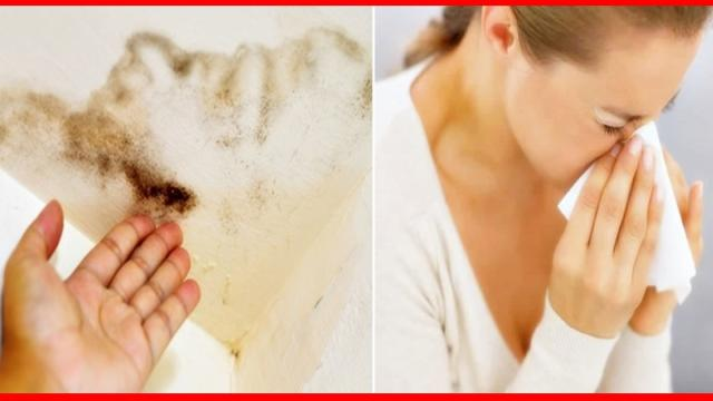 Doença do mofo: confira os principais sintomas