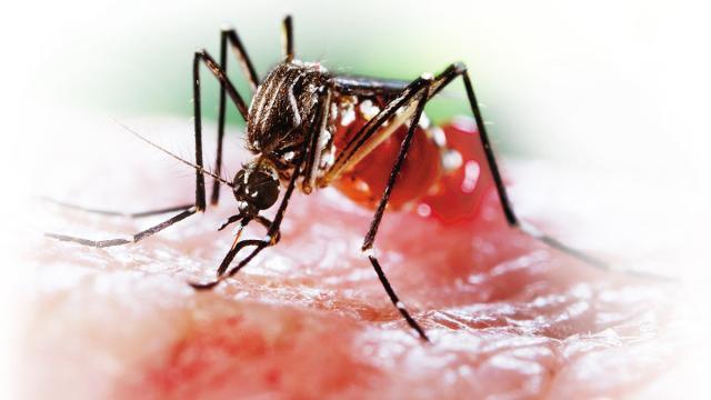 Lucha contra las epidemias transmitidas por mosquitos