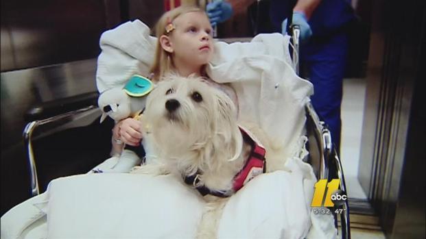 Cachorrinha cuida da sua dona doente