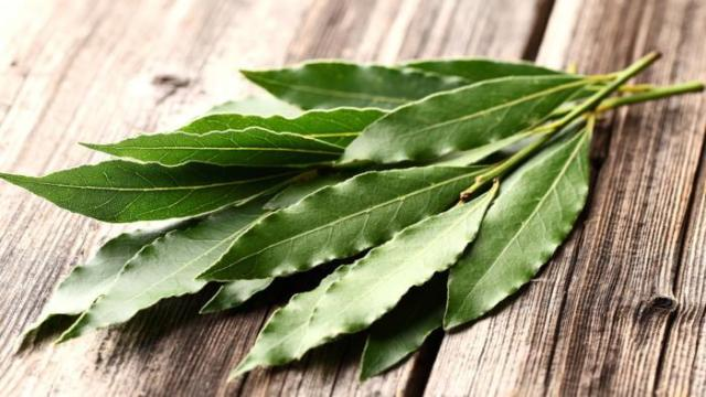 Los beneficios para la salud de los eucaliptos