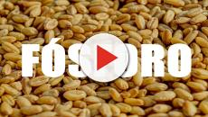 selenio y el fósforo: minerales importantes para nuestro organismo