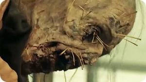 Miedo a los muertos vivientes: comienza el primer cruce con la serie original