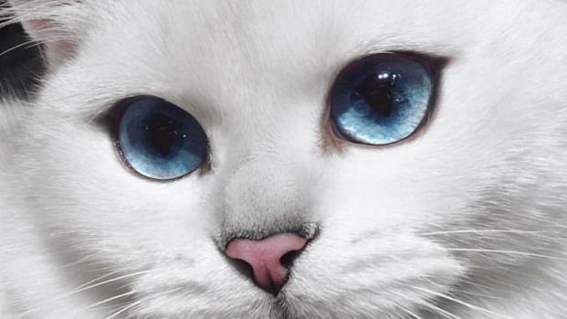 Un estudio inglés dice que los propietarios de gatos son más inteligentes
