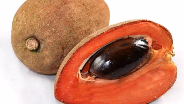 El zapote y sus excelentes usos medicinales