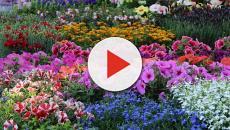 Mostra piante e fiori dal 25 aprile al 1 maggio a Firenze