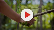 22 de abril es el Día de la Tierra: rinde homenaje al medio ambiente