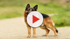 Displasia de cadera en perros: causas y síntomas