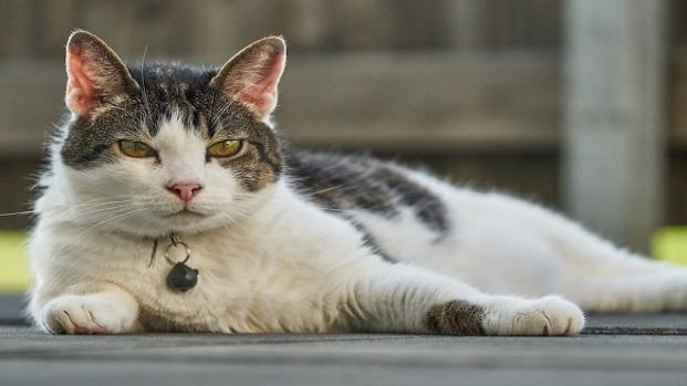 Si un gato babea es porque ha comido algo que no debía