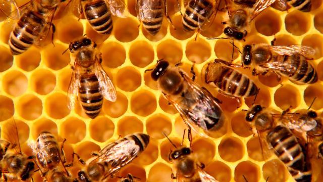 La miel se considera un alimento milagroso que da muchos beneficios para la piel