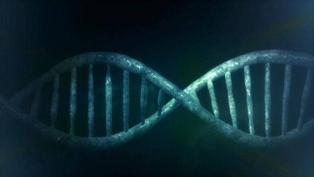 Los efectos del patrimonio genético en la convivencia