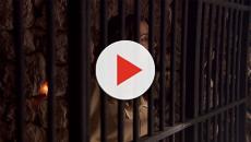 Il Segreto anticipazioni puntate: Emilia e Alfonso arrestati, Consuelo muore?