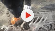 Bizarro esqueleto é achado em praia da Inglaterra, veja o vídeo