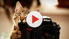 Tama: la gata que tiene un puesto de trabajo esencial